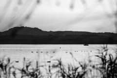 Une vue de lac avec le bateau et les oiseaux sur l'eau, et hors focale plante encadrer l'image image libre de droits