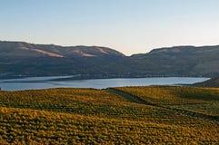 Une vue de lac Chelan du vignoble de Benson au coucher du soleil Photo libre de droits
