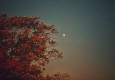 Une vue de lune avec un contact artistique photographie stock