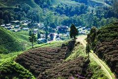 Une vue de plantation de thé Photographie stock