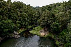 Une vue de réserve naturelle de forêt de Whangarei de la cascade Images stock