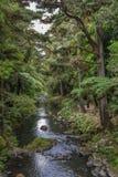Une vue de réserve naturelle et de rivière de forêt de Whangarei Image libre de droits