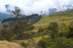 Une vue de Valle de Cocora photographie stock libre de droits
