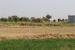 Une vue des champs dans le pays du Pendjab Photo libre de droits