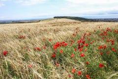 Une vue des dérives des pavots sur Lancing vers le bas dans le Sussex est, Angleterre photo stock