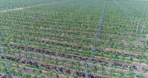 Une vue des jeunes plantes des arbres de l'air, volant au-dessus des jeunes plantes d'arbre, une jardinerie, un jeune jardin de p banque de vidéos