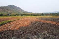 Une vue du gisement stérile de riz, Thaïlande photos libres de droits