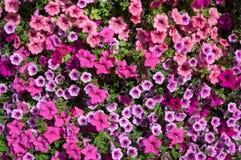 Une vue en gros plan des fleurs d'usine Photos stock