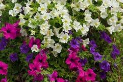 Une vue en gros plan des fleurs d'usine Images stock