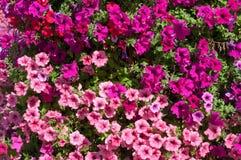 Une vue en gros plan des fleurs d'usine Images libres de droits