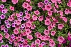 Une vue en gros plan des fleurs d'usine Photographie stock