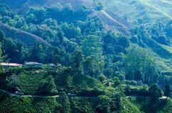 Une vue facinating à la plantation de thé en Cameron Highland Images libres de droits