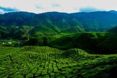 Une vue facinating à la plantation de thé en Cameron Highland Images stock