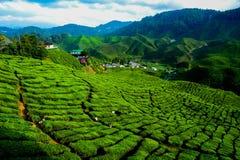 Une vue facinating à la plantation de thé en Cameron Highland Photo libre de droits