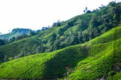 Une vue facinating à la plantation de thé en Cameron Highland Photographie stock