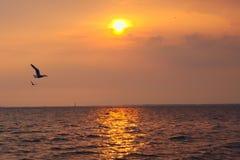 Une vue la plus belle des mouettes thaïlandaises, volant sur un coucher du soleil d'or pittoresque de soirée, au-dessus d'un delt photos stock