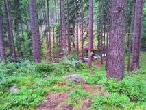 Une vue ordinaire de la forêt photo libre de droits