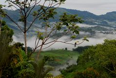 Une vue panoramique de Costa Rican Rain Forest montagneux photo libre de droits