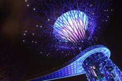 Une vue plus étroite du verger de Supertree Photos libres de droits