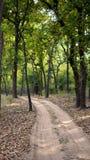 Une vue scénique de portrait dans la forêt image stock