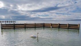 Une vue sur le Lac Léman, avec un cygne gracieux dans l'avant photo stock