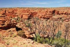 Une vue sur le mur de Canyon Southern du Roi Images libres de droits