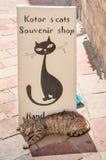 Une vue typique avec un signe de boutique et un chat dans Kotor Photographie stock