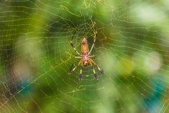 Une vue typique dans l'uva de Punta en Costa Rica image stock
