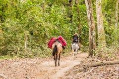 Une vue typique en parc national Colombie de Tayrona image stock