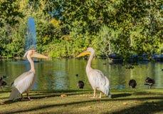 Une vue typique en parc vert à Londres photo stock
