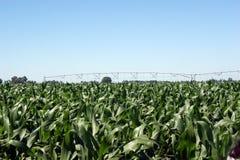 Une zone de maïs avec le système d'irrigation Images stock