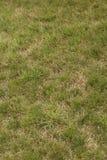 Uneinheitliches grünes Gras Stockbild