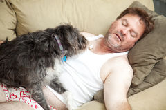 Unemployed Man Passed Out. On the couch in his underwear. His dog is eating popcorn from his chest royalty free stock image