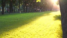 Unerkennbare Leute gehender Sommerabend im allgemeinen Stadtpark mit Sonnenbohnenaufflackern stock footage