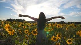 Unerkennbare Mädchenstellung auf gelben Sonnenblumenfeld- und anhebenhänden Junge Schönheit im Kleid Sommer genießend stock video footage