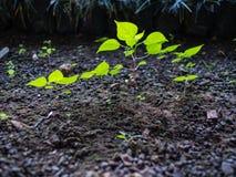 Unerwünschte Flora Grow im Schatten stockfoto