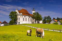 UNESCO heritage church named Wieskirche. Landmark and UNESCO heritage church named Wieskirche in Bavaria im meadow with Haflinger horses royalty free stock photography