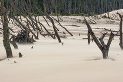 Unesco park narodowy - Leba, Polska. Zdjęcie Stock