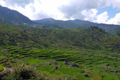 UNESCO Rice tarasy w Sagada, Luzon Filipiny Obraz Stock