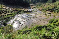 UNESCO Rice Terraces in Bangaan, Philippines Royalty Free Stock Image