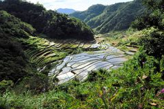 UNESCO Rice Terraces in Bangaan, Philippines Royalty Free Stock Photos