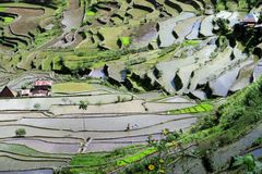 UNESCO Rice Terraces in Batad, Philippines. Famous UNESCO world heritage rice terraces in Batad near Banaue, Northern Luzon, Infugao province, Philippines Royalty Free Stock Photo
