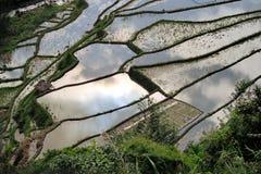 Unesco-Rijstterrassen in Bangaan, Filippijnen stock foto's