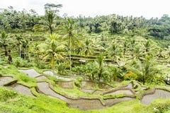 Tegalalang rice terraces near Ubud, Bali. UNESCO World Heritage Site Tegalalang Rice Terraces near Ubud, Bali Stock Photos