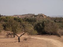 Landscape in the valley of temples, sicily, Italy royalty free stock photo