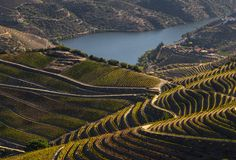 Free UNESCO World Heritage, The Beautiful Endless Lines Of Douro Valley Vineyards. Royalty Free Stock Image - 161085036