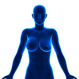 Uneven Breasts - different sizes Stock Image