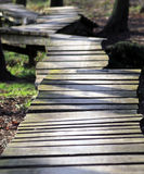 Uneven wooden path in forest Royalty Free Stock Photography