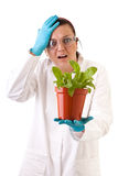 Unexpected experiment result - gmo Royalty Free Stock Images