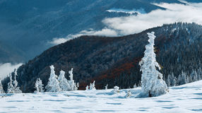 Unexpected fall in the mountains. First, an unexpected snow. The picture was taken in the Ukrainian Carpathians Stock Image